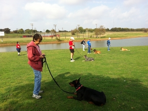 Off Leash Dog Training - Fort Worth TX